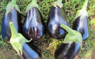 Баклажан Блэк бьюти: описание и характеристика сорта, урожайность с фото