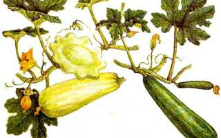Можно ли сажать кабачки в июле и августе в открытый грунт?
