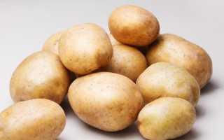 Картофель Рогнеда: описание и характеристика сорта, урожайность с фото