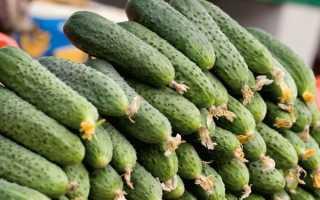 Огурцы корнишоны: описание лучших сортов для открытого грунта с фото