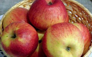 Яблоня Коричное новое: описание и характеристики сорта, урожайность с фото