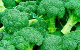 Брокколи: выращивание и уход в открытом грунте и теплице в домашних условиях фото и видео