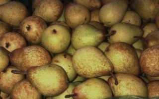 Как хранить груши в домашних условиях на зиму: в холодильнике, погребе