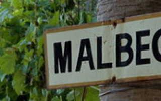 Виноград Мальбек: описание и характеристики сорта, правила выращивания и ухода