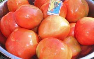 Томат Бизнес-леди: характеристика и описание сорта, отзывы садоводов с фото
