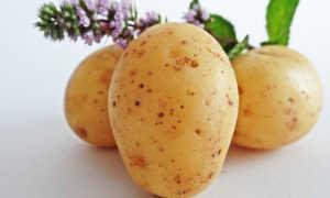 Маринованная картошка: 3 вкусных рецепта приготовления в банках на зиму
