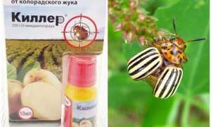 Препарат Киллер от колорадского жука: инструкция по применению средства