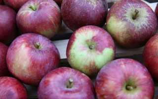 Яблоня Спартан: описание и характеристика сорта, выращивание и уход с фото