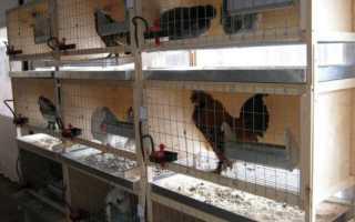 Клеточное содержание кур в домашних условиях: размеры и плотность посадки