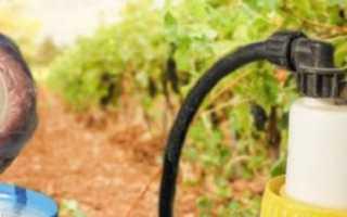 Коллоидная сера для винограда: инструкция по применению для обработки