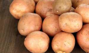 Картофель Ирбитский: описание и характеристика сорта, урожайность с фото