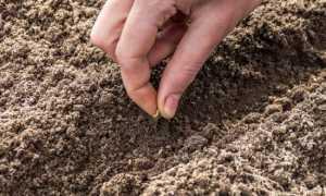 Монофосфат калия: применение для внекорневой подкормки картофеля