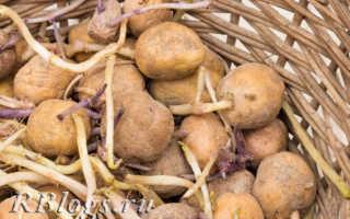 Посадка картофеля: как правильно сажать, чтобы получить хороший урожай?
