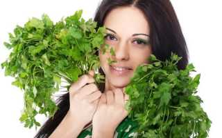 Петрушка: полезные свойства для похудения и возможные противопоказания