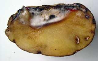 Фузариоз картофеля: описание и лечение, меры борьбы с фото