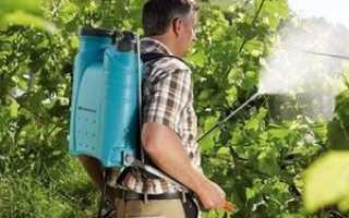 Гроздевая листовертка винограда: методы борьбы народными средствами и препаратами