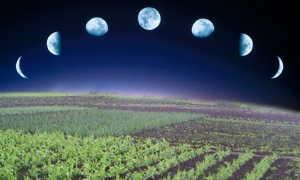 Лунно-посевной календарь на июль 2020: благоприятные и неблагоприятные дни посадок