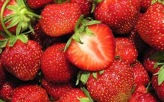 Клубника Кент: описание сорта и характеристики, выращивание и размножение с фото