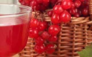 Вино из калины: 9 простых рецептов приготовления в домашних условиях