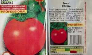 Томат Сказка: характеристика и описание сорта, урожайность с фото