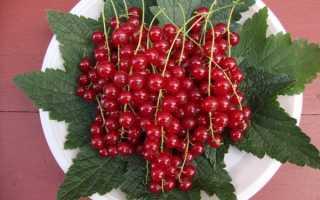 Смородина красная Натали: описание сорта, характеристика, отзывы, выращивание