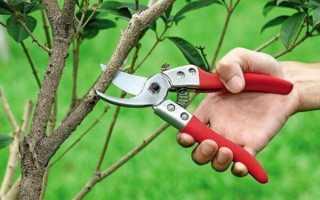 Весенняя обрезка плодовых деревьев. Сроки и схема весенней обрезки