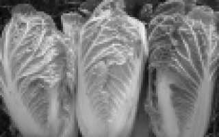 Лучшие сорта пекинской капусты: описание, выращивание и болезни с фото