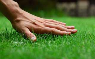 Газонная трава которая уничтожает сорняки: чем засеять участок, готовые смеси