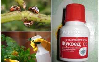 Жукоед от колорадского жука: инструкция по применению средства
