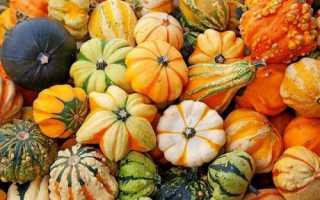 Декоративная тыква: описание сортов, выращивание и применение с фото