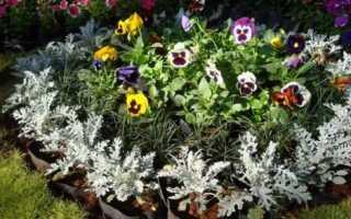Цветы однолетние для дачи: 15 лучших видов с описанием цветущие все лето