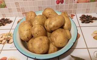 Семена картофеля: как вырастить в домашних условиях, посадка и уход с видео