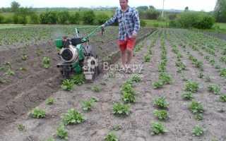 Окучивание картофеля мотоблоком и культиватором: как правильно с видео