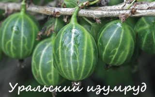 Сорта крыжовника для Сибири и Урала: ТОП 20 лучших видов с описанием и фото