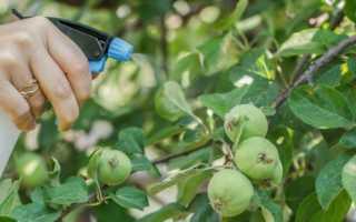 Тля на яблоне: как бороться химическими и народными средствами, чем обработать