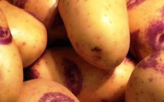 Картофель Иван-да-Марья и Иван-да-Шура: описание сортов, урожайность с фото