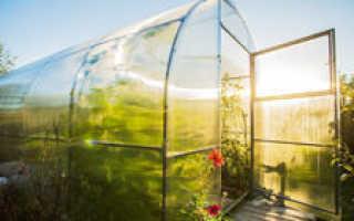 Выращивание огурцов в теплице из поликарбоната: уход, технология как правильно