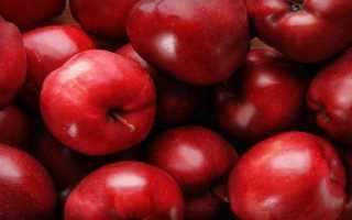 Apple Tree Arbat: описание, лучшие посадки и правила ухода, отзывы, фотографии