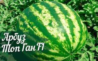 Арбуз Топ Ган: описание и технология выращивания, характеристика сорта F1