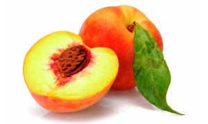 Вино из персиков в домашних условиях: 12 простых рецептов приготовления