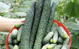 Огурцы Изумрудный поток: особенности выращивания, описание достоинств и недостатков сорта с фото