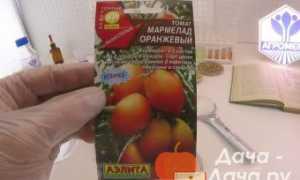 Томат Мармелад оранжевый: характеристика и описание сорта с фото