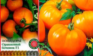 Томат Бочонок: характеристика и описание сорта, урожайность с фото