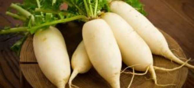 Редька белая: полезные свойства и противопоказания для организма человека