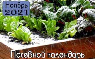 Ноябрь 2021 года – Лунный посевной календарь для садовода, цветовода и цветовода!
