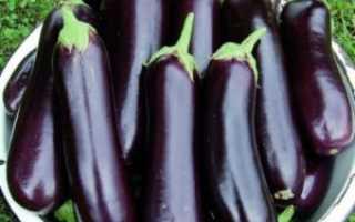 Баклажан Валентина: описание и характеристики сорта, выращивание и уход с фото