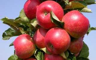 Яблоня Супер Прекос: описание и характеристики сорта, выращивание и урожайность