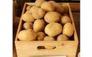 Картофель Ривьера: описание и характеристика сорта, правила выращивания с фото
