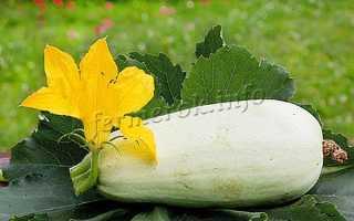 Кабачок Ролик: описание и характеристика сорта, отзывы садоводов с фото