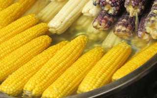 Где растет кукуруза: районы выращивания в России и мире